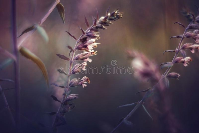 Imagem bonita de flores selvagens em um por do sol roxo Paisagem com wildflowers Fundo floral do por do sol Foto do vintage imagem de stock