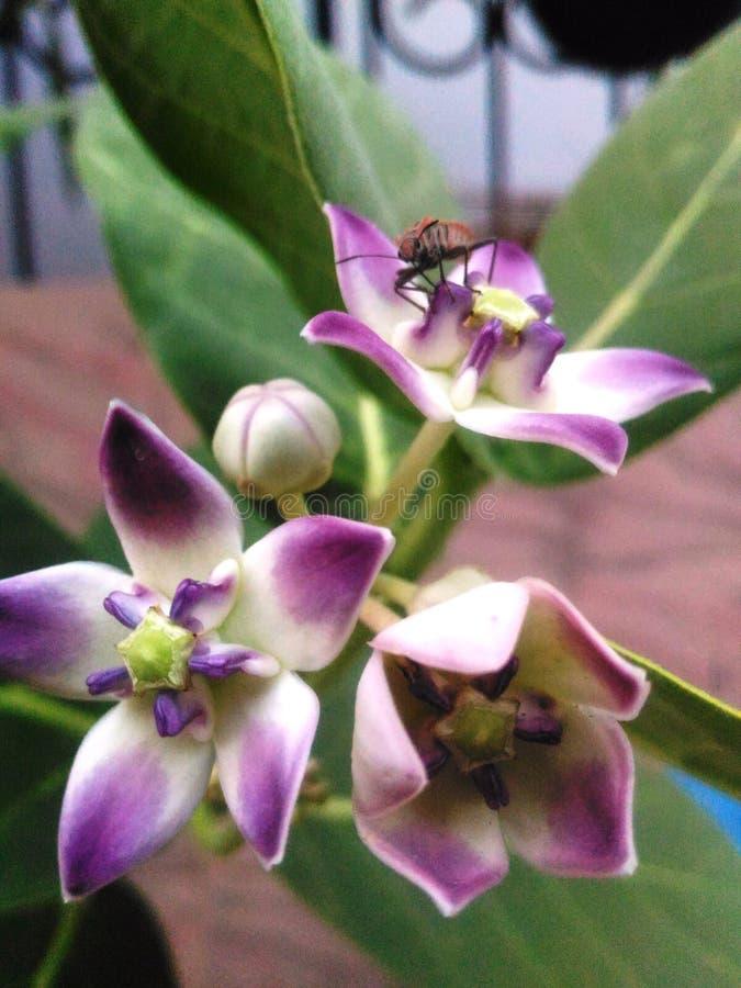 Imagem bonita do close up do inseto na flor fotografia de stock royalty free