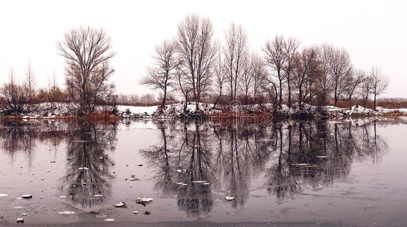 Imagem bonita do inverno landscape As árvores refletiram na água do lago foto de stock