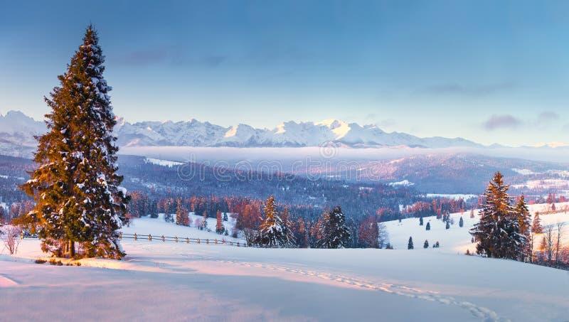 Imagem bonita do inverno landscape Zakopane, Poland fotos de stock