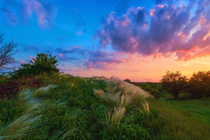 Imagem bonita do por do sol sobre o campo de grama da pena foto de stock royalty free