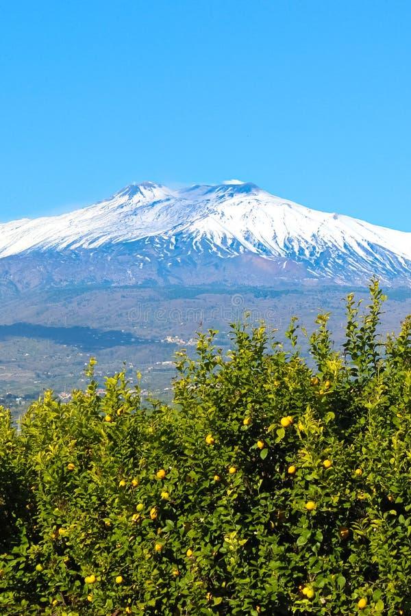 Imagem bonita do vulcão de Monte Etna capturada com as árvores de limão com os limões amarelos maduros Céu azul, dia ensolarado,  imagens de stock