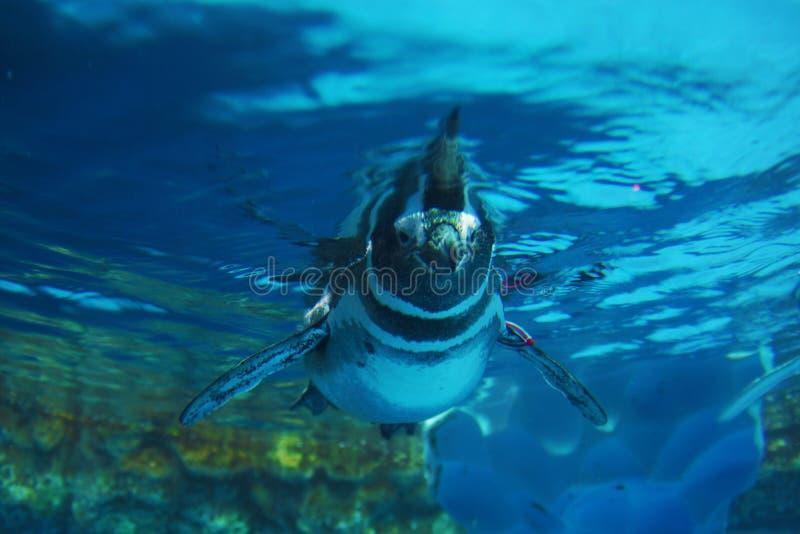 Imagem bonito dos pinguins foto de stock royalty free