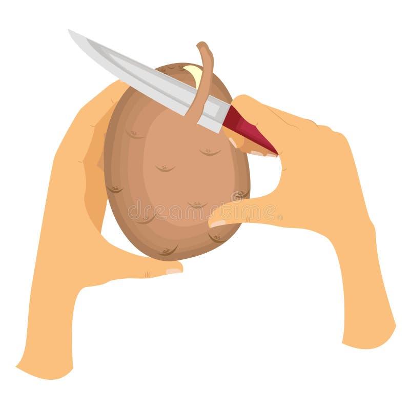 Imagem como descascar batatas da casca A mão esquerda guarda batatas, o assistente guarda a faca e corta delicadamente a pele ilustração royalty free