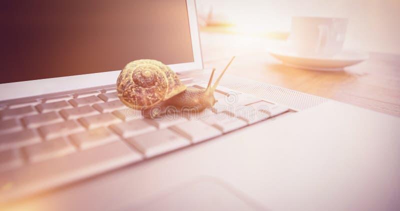 Imagem composta do caracol em um fundo branco foto de stock