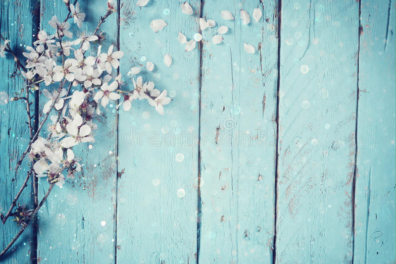 Imagem da árvore branca das flores de cerejeira da mola na tabela de madeira azul imagem filtrada vintage foto de stock royalty free