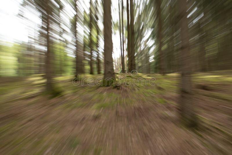 A imagem da árvore do efeito especial, fez sinal fotografia de stock royalty free