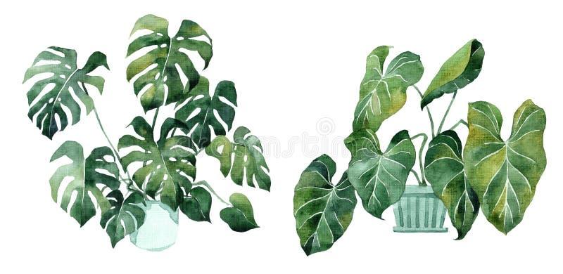 Imagem da aquarela com folhas tropicais e folhas de plantas internas Planta home em uns potenci?metros greenery suculento Ilustra ilustração stock