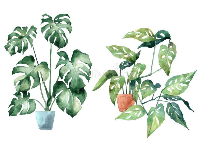 Imagem da aquarela com folhas tropicais e folhas de plantas internas ilustração do vetor