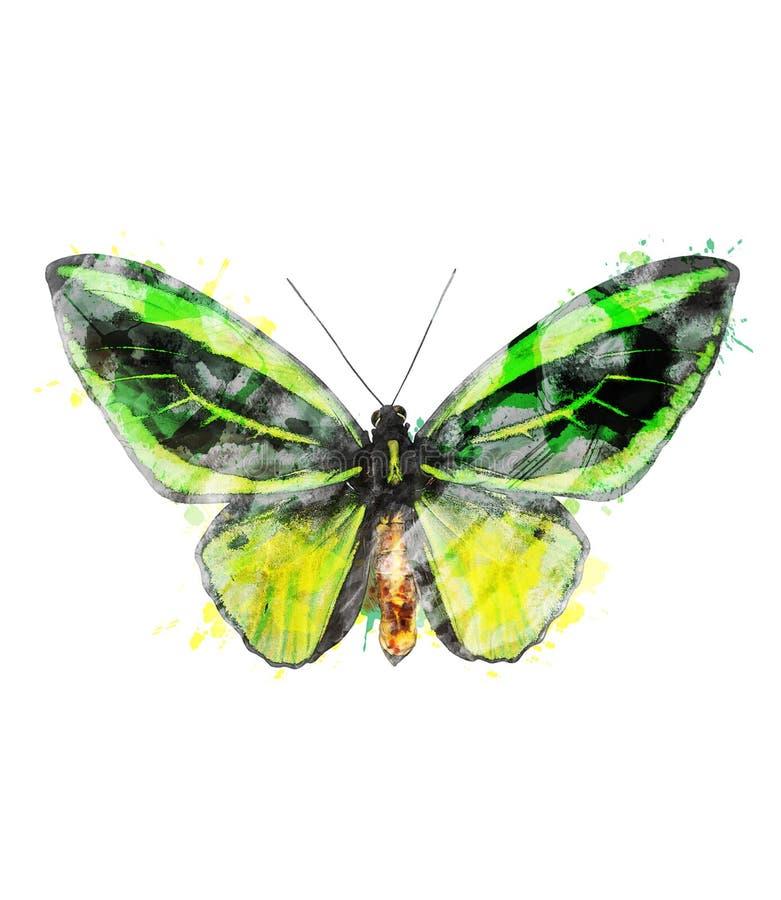 Imagem da aquarela da borboleta tropical ilustração stock