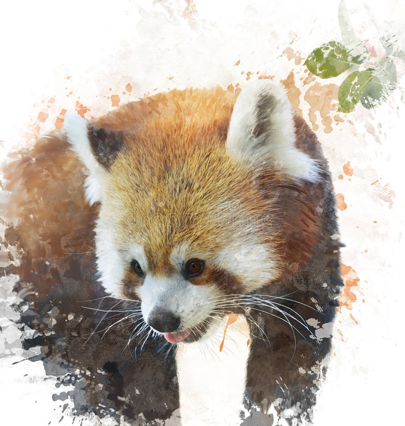 Imagem da aquarela da panda vermelha ilustração stock