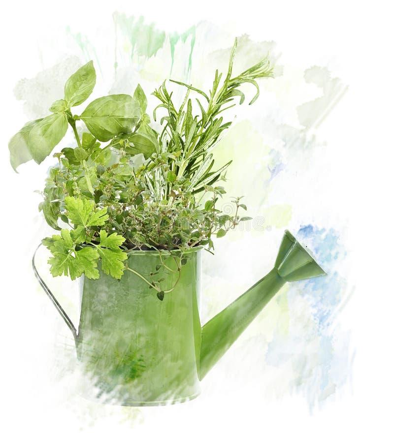 Imagem da aquarela das ervas ilustração stock