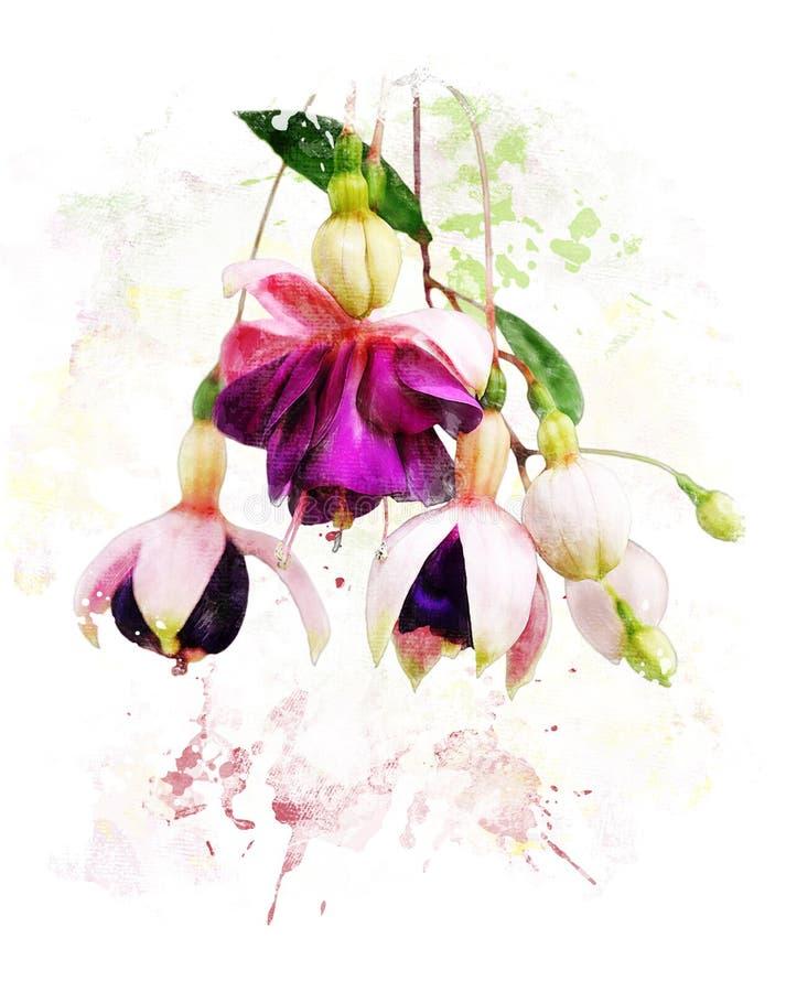 Imagem da aquarela de flores fúcsia ilustração royalty free