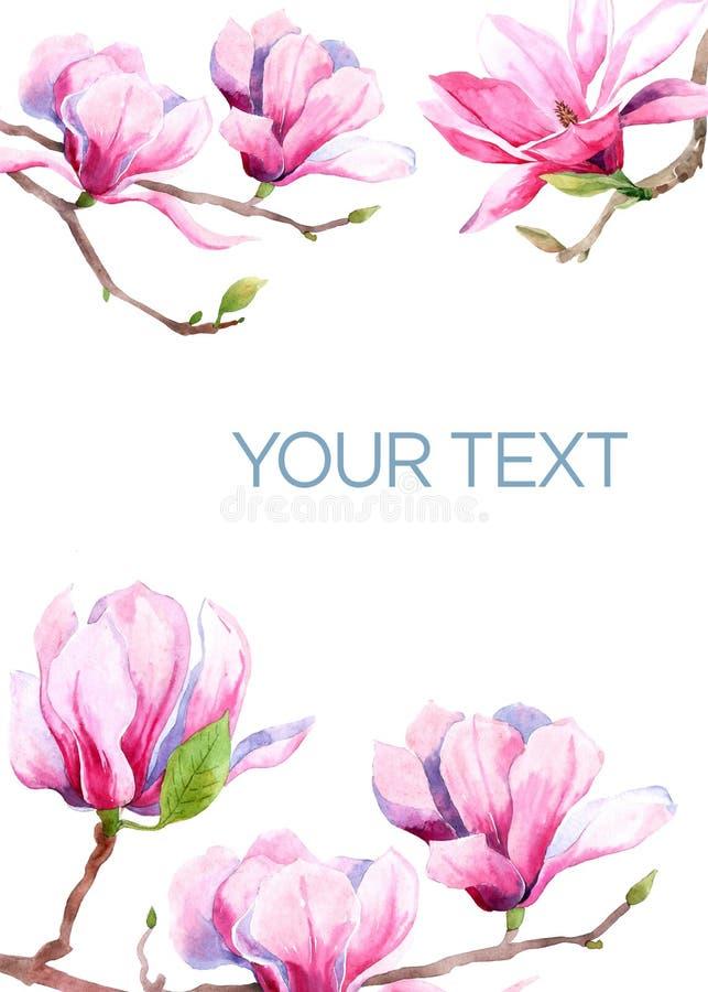 Imagem da aquarela de flores da magn?lia Flor da mola da magn?lia cart?o e convite do casamento ilustração stock