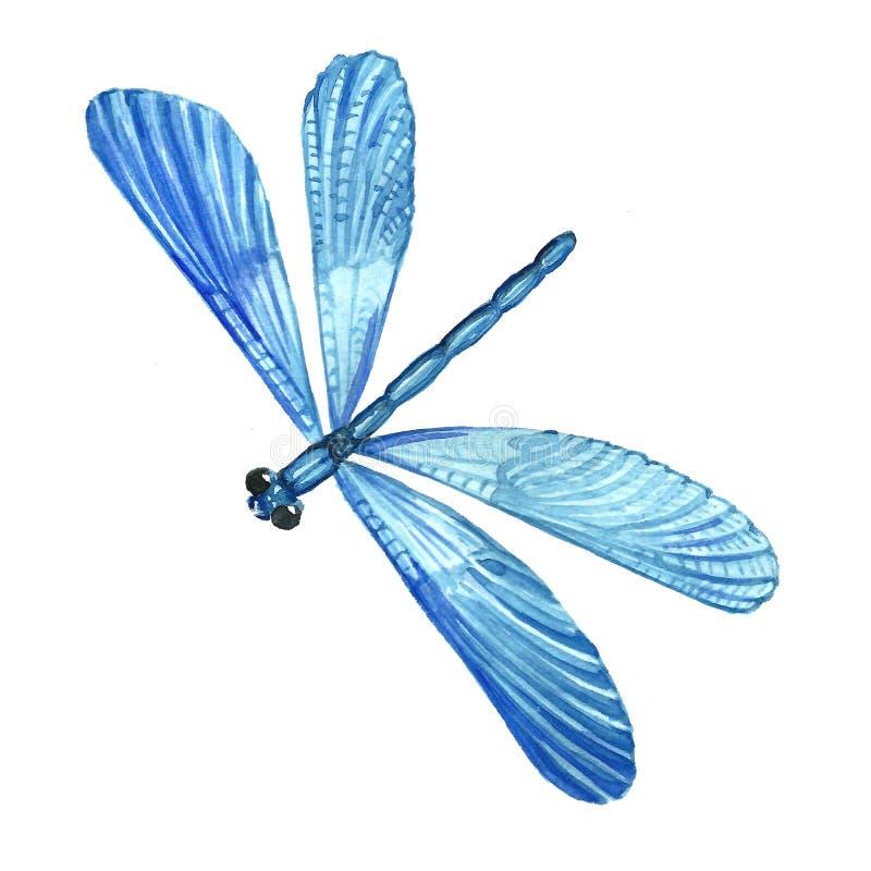 Imagem da aquarela de uma libélula do azul do voo ilustração stock