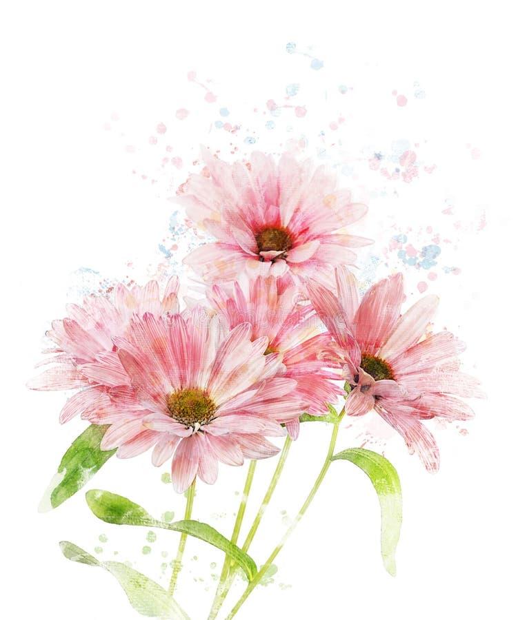 Imagem da aquarela do crisântemo ilustração royalty free