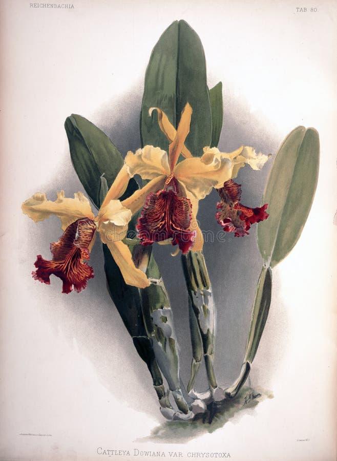 Imagem da arte Impressão digital imagem de stock