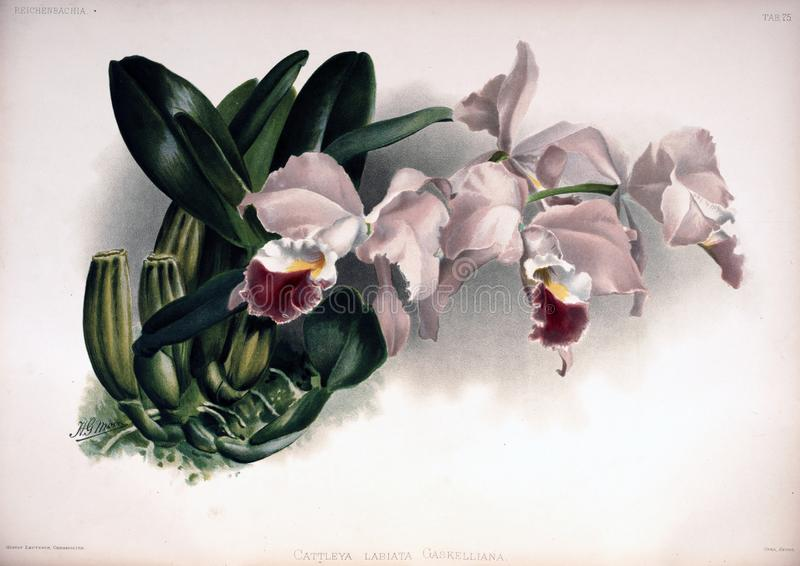 Imagem da arte Impressão digital fotos de stock royalty free