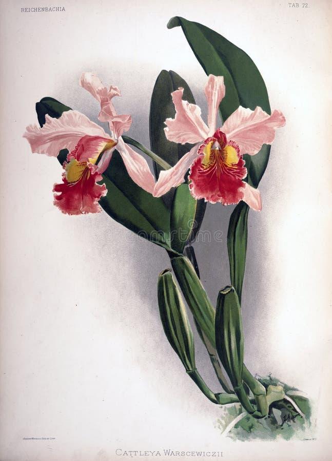 Imagem da arte Impressão digital fotografia de stock royalty free