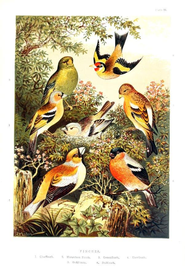 Imagem da arte Impressão digital ilustração royalty free