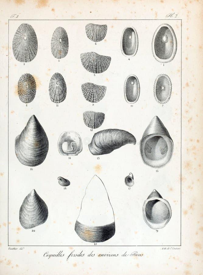 Imagem da arte Impressão digital foto de stock