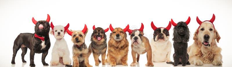 Imagem da colagem de muitos cães bonitos que vestem chifres do diabo fotos de stock royalty free