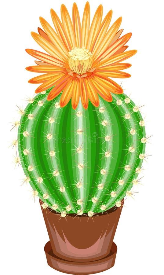 Imagem da cor Planta Potted em um potenci?metro O cacto verde ? esf?rico com os tub?rculos cobertos com as espinhas Mammillaria,  ilustração stock