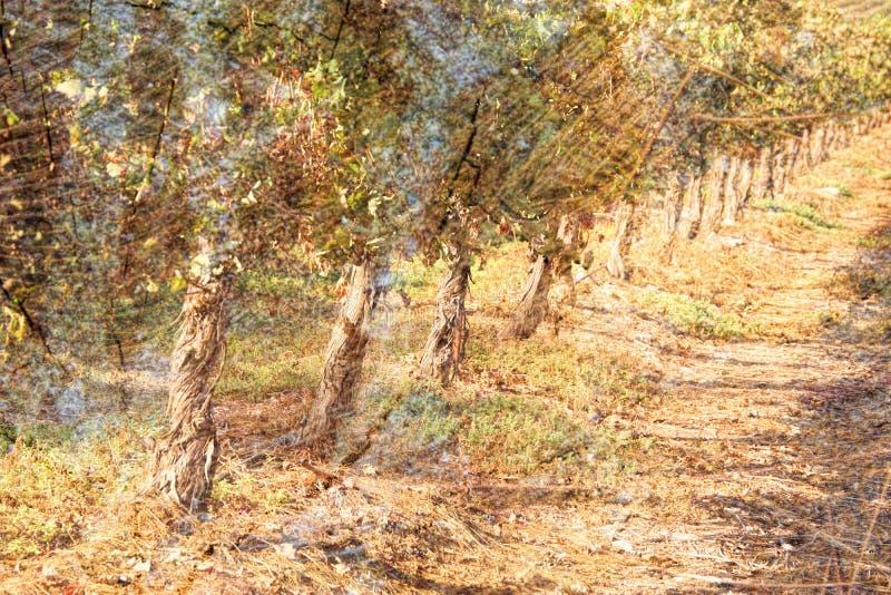 imagem da exposição dobro dos logs e das árvores de madeira no por do sol ilustração royalty free