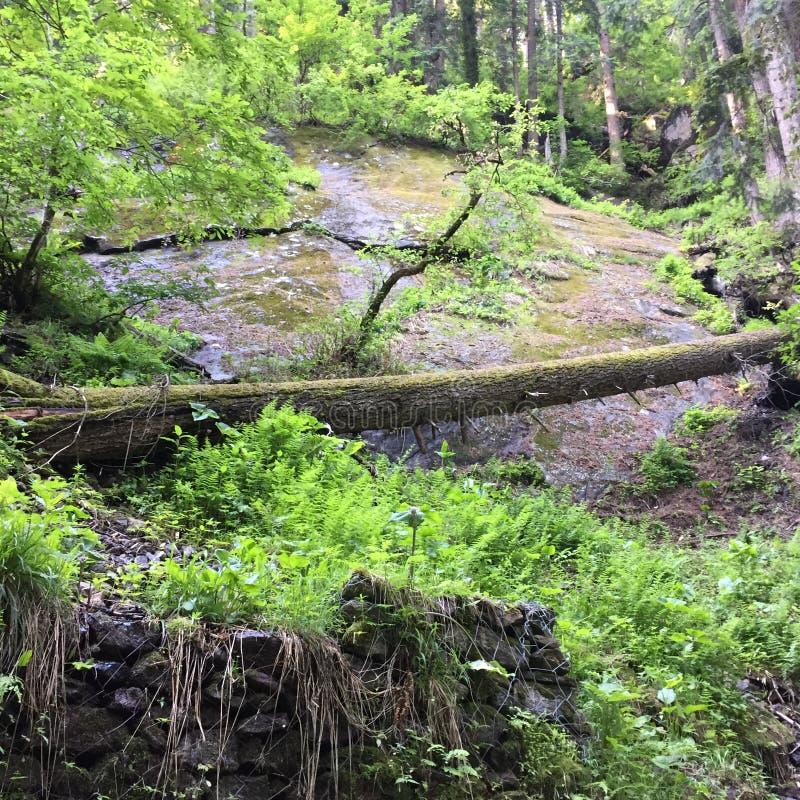 Imagem da natureza em india Himachal Pradesh imagens de stock royalty free