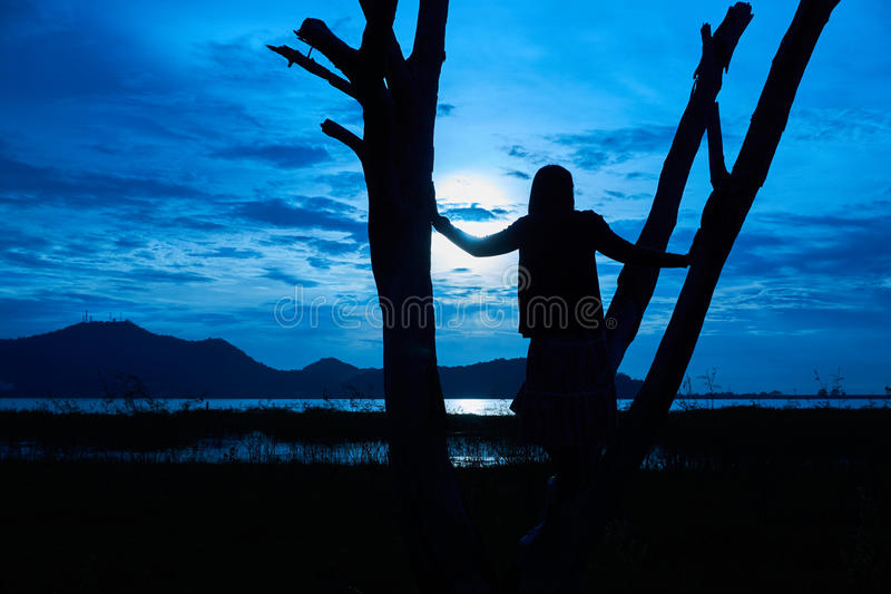 A imagem da silhueta da mulher está na árvore inoperante foto de stock