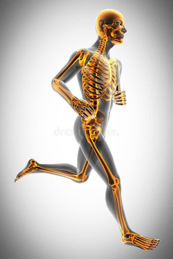 Imagem da varredura da radiografia dos ossos do ser humano ilustração royalty free