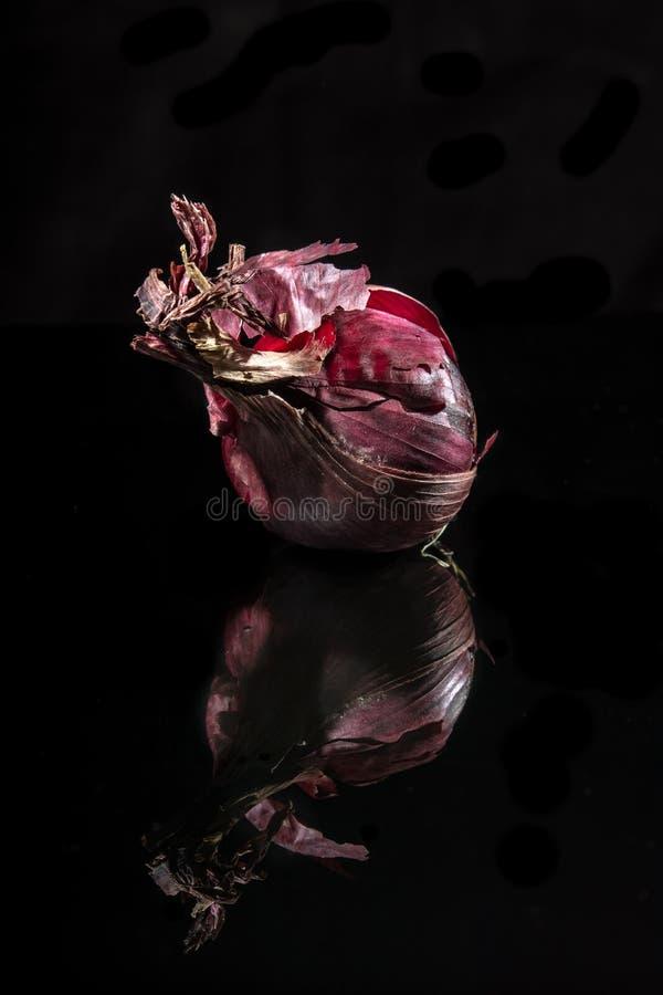 Imagem da vida do destilador da cebola vermelha fotos de stock royalty free