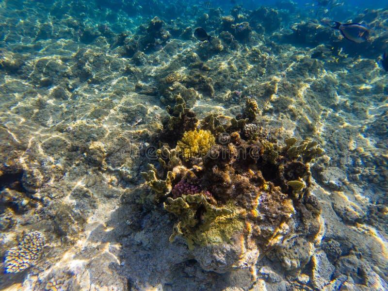 Imagem da vida marinha - o recife de corais sob o clea de cristal imagem de stock
