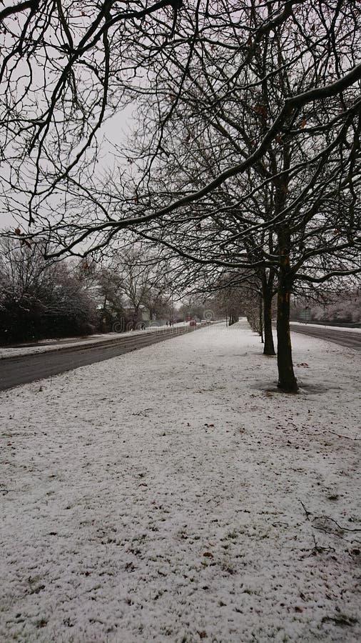 Imagem das árvores na neve imagens de stock royalty free