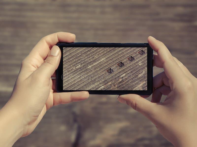 Imagem das formigas que vão na placa de madeira no telefone celular Fêmea ho imagens de stock royalty free