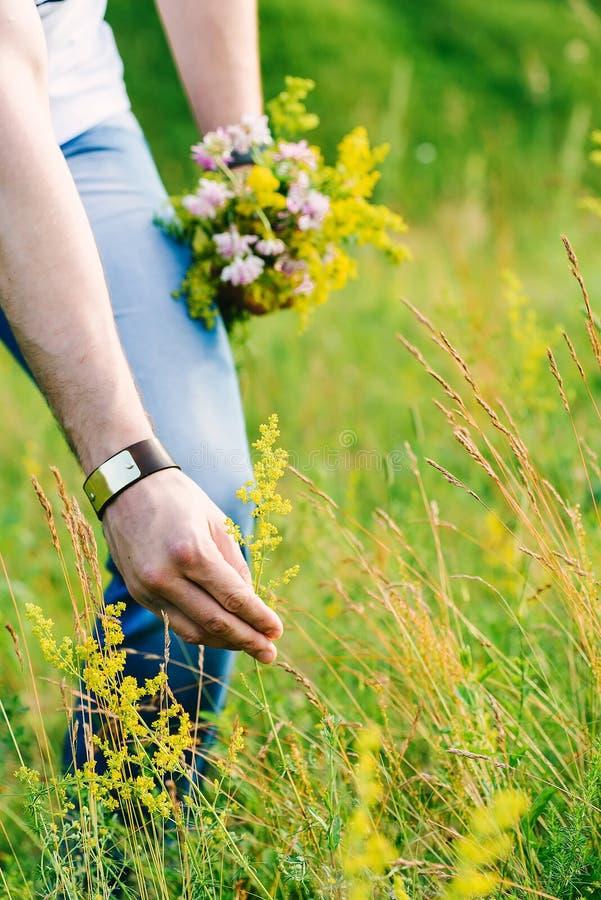 Imagem das mãos masculinas que rasgam um wildflower verde imagens de stock