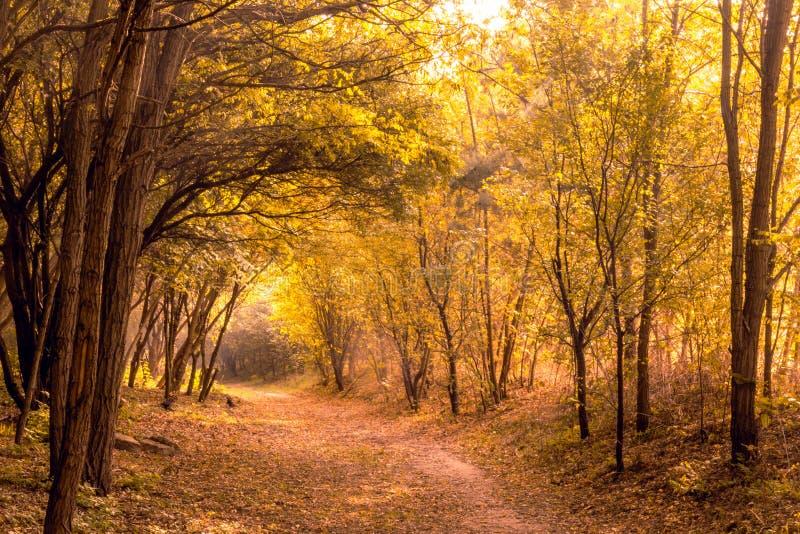 Imagem de árvores outonais amarelas foto de stock