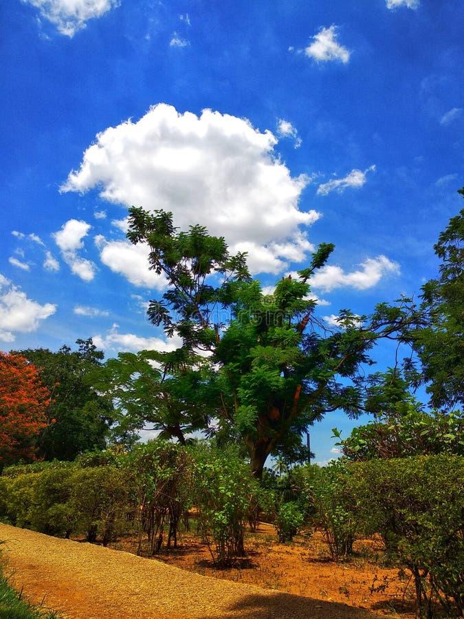 Imagem de fundo bonita da árvore e das nuvens por WandererPhotography fotografia de stock