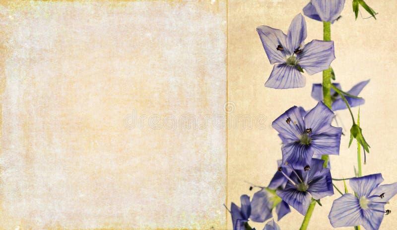 Imagem de fundo com elementos florais ilustração royalty free
