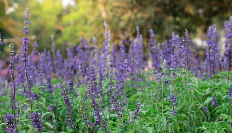 A imagem de fundo das flores coloridas, flores coloridas imagem de stock royalty free