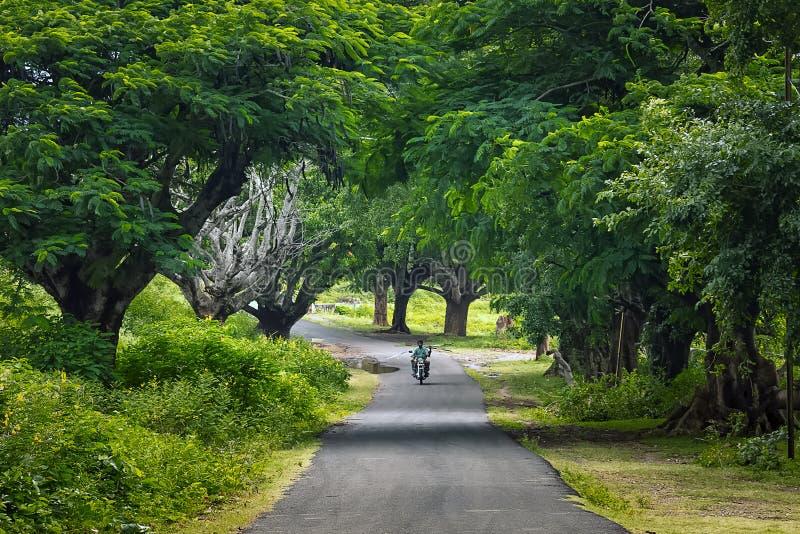 Imagem de fundo do país da estrada com as árvores na Índia de Masnagudi Tamilnadu de ambos os lados fotografia de stock