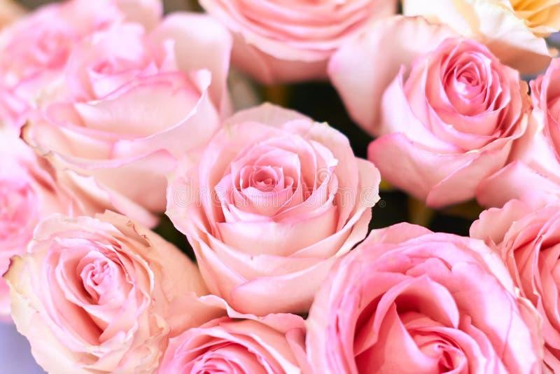 Imagem de fundo de lindas rosas rosa maravilhosas imagem de stock royalty free