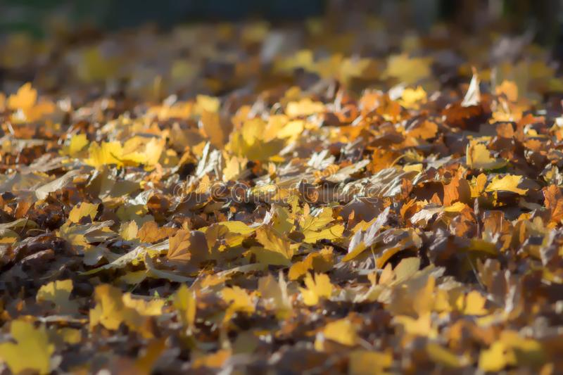 Imagem de fundo sonhadora macia das folhas de outono Queda da folha foto de stock royalty free