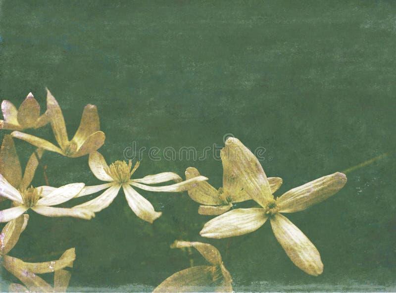 Imagem de fundo Textured com flora fotografia de stock