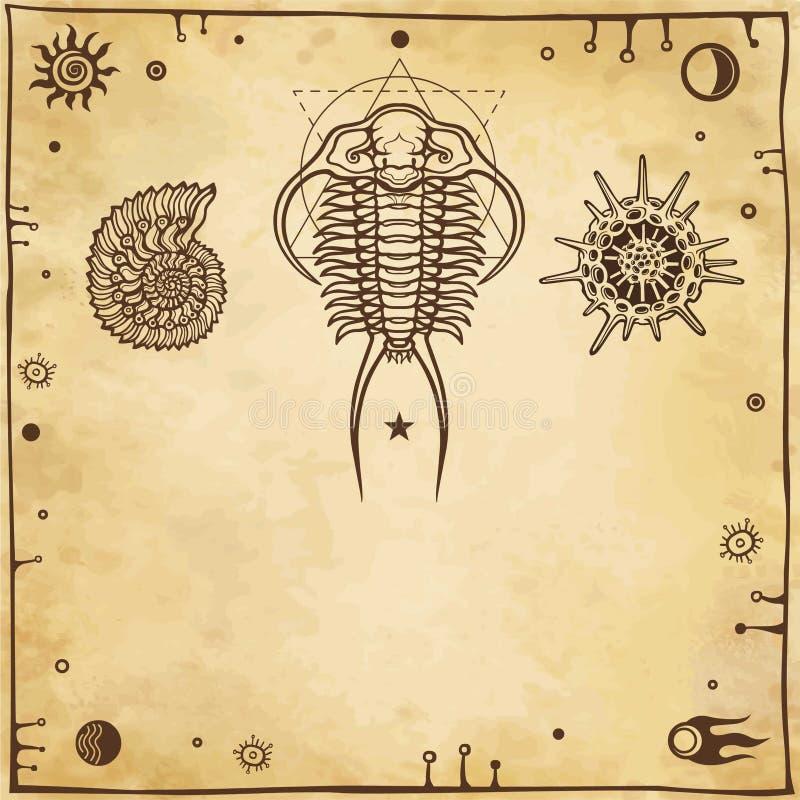 Imagem de organismos marinhos antigos: trilobit, molusco, radiolaria ilustração royalty free