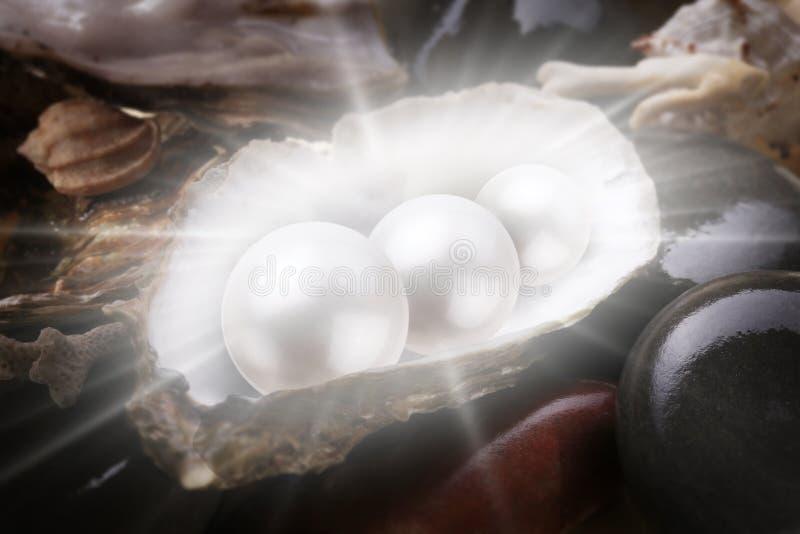 Imagem de três pérolas no escudo foto de stock royalty free