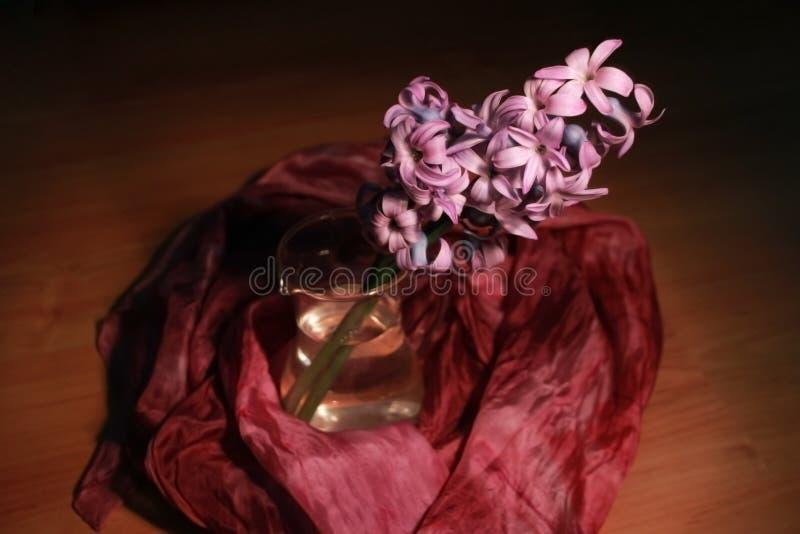 Download Jacinto foto de stock. Imagem de retrato, flora, seasonal - 29845408