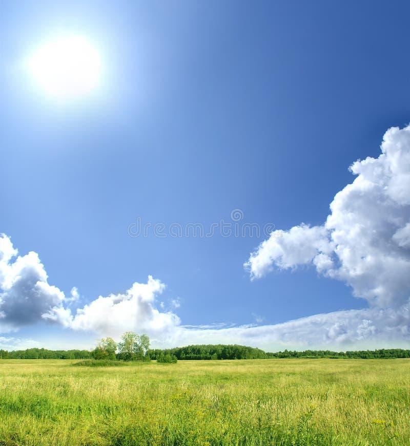 Imagem de um prado verde em um fundo do céu foto de stock royalty free