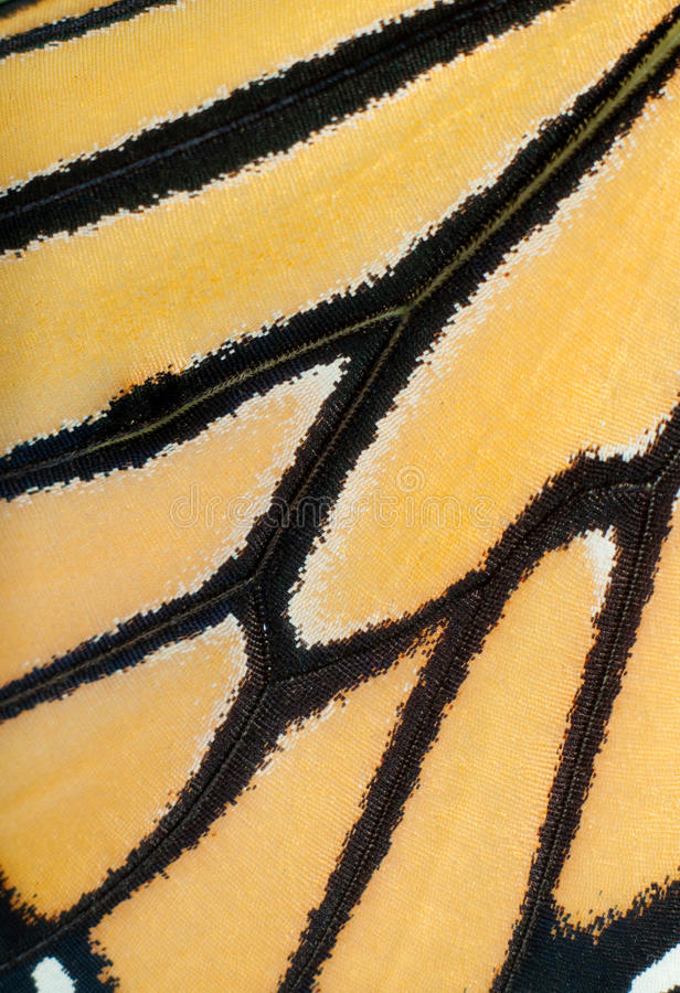 Imagem de uma asa viva da borboleta de monarca foto de stock