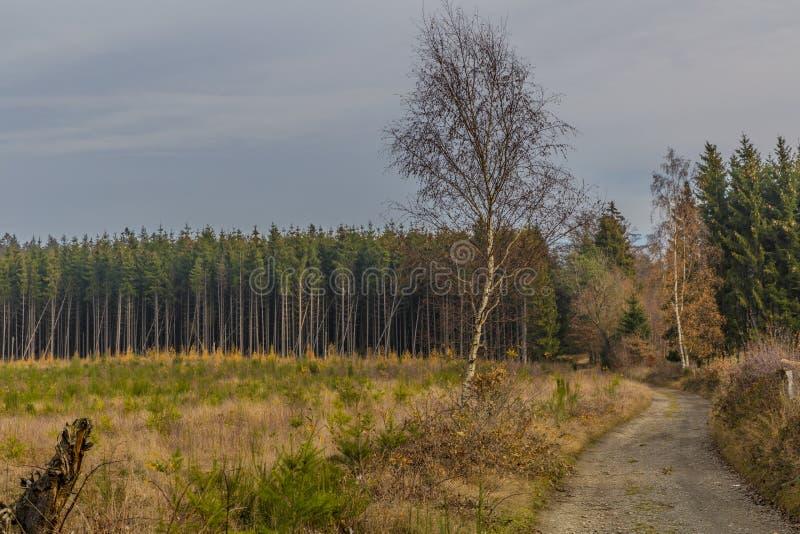 Imagem de uma estrada das pedras que conduzem à floresta com muitos pinheiros foto de stock